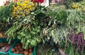 Azucar en la Sangre, 20 Plantas Medicinales Para Balancearla